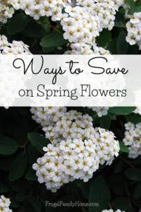 Some great ways to save on spring flowers. Frugal Family Home