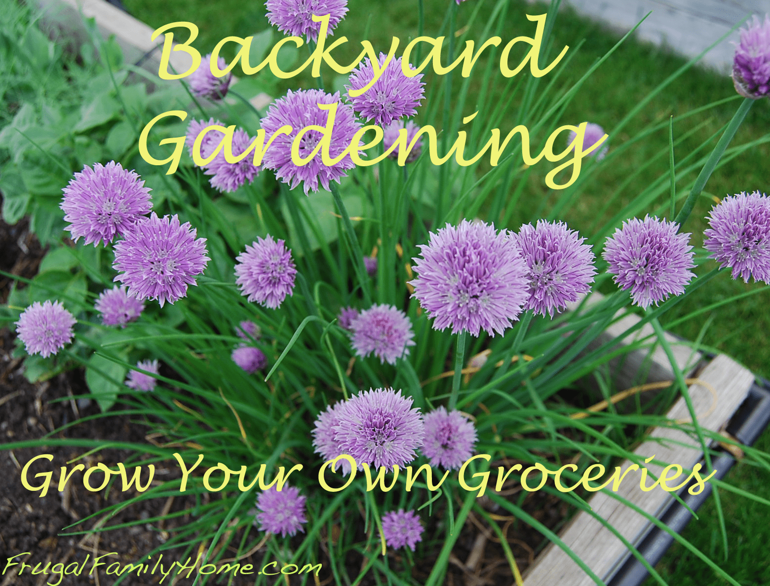 Backyard Gardening…Garden Update