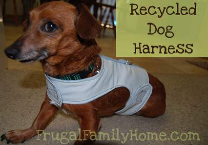 Dog harness Banner