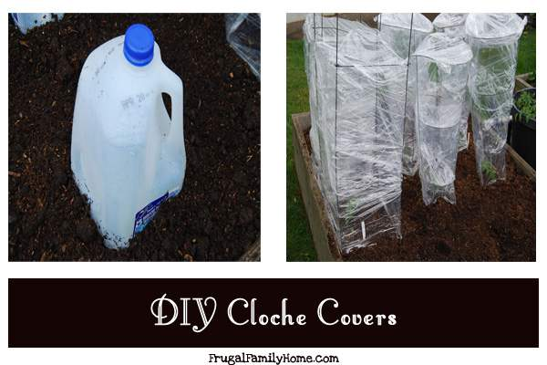 Cloche Covers