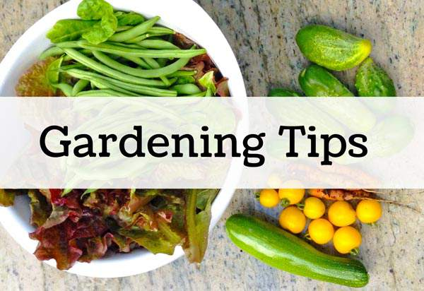 Great Backyard Gardening tips for the backyard gardener.