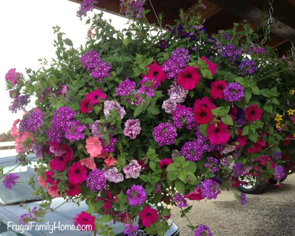 Hanging Baskets Out Front