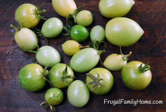 Green tomatoes of different shades