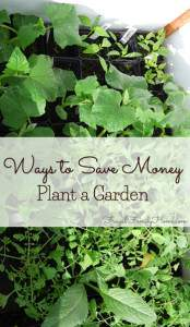Gardening to save money