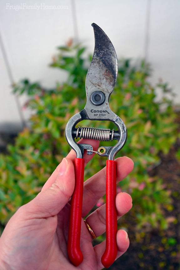 My favorite garden shears.