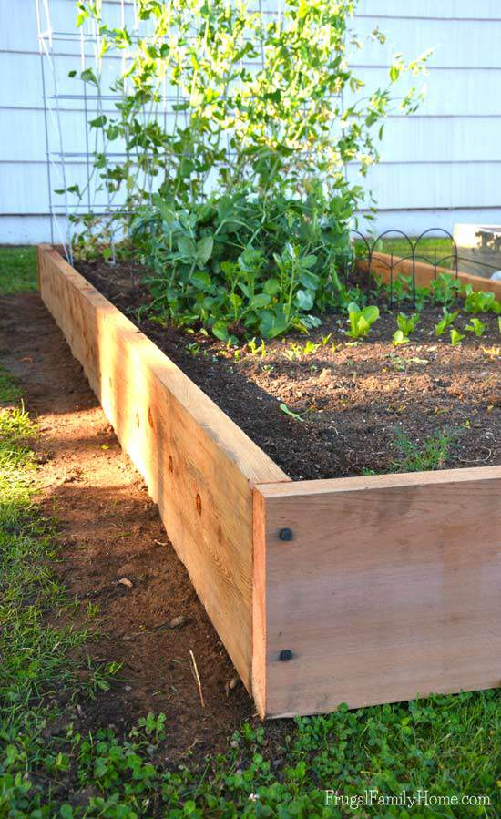 Building raised beds with cedar