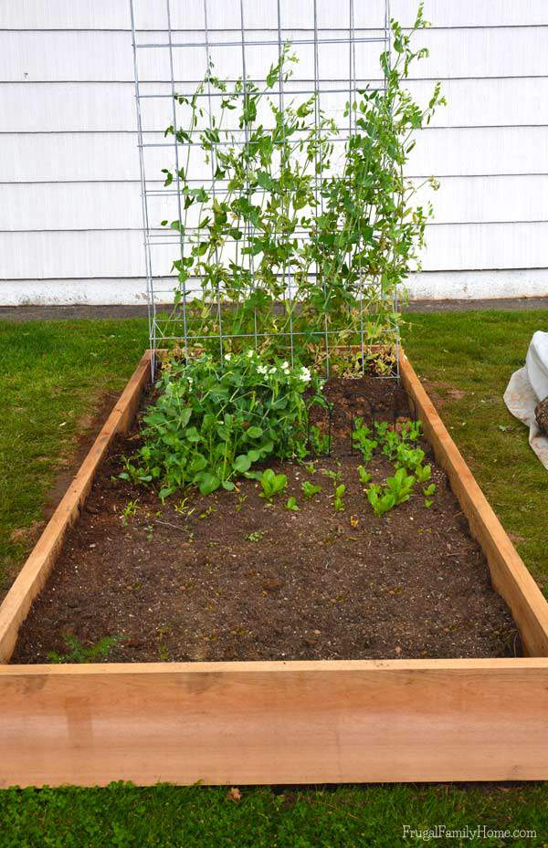 Our new cedar raised garden bed, Frugal Family Home