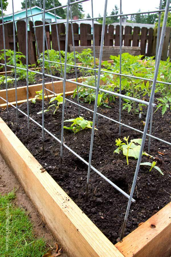Make Your own garden trellis in just a few minutes with just a few supplies you can find at the hardware store