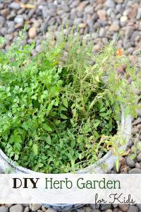 Container Herb Garden for Kids
