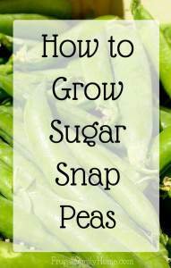 Gardening Guide, Growing Sugar Snap Peas