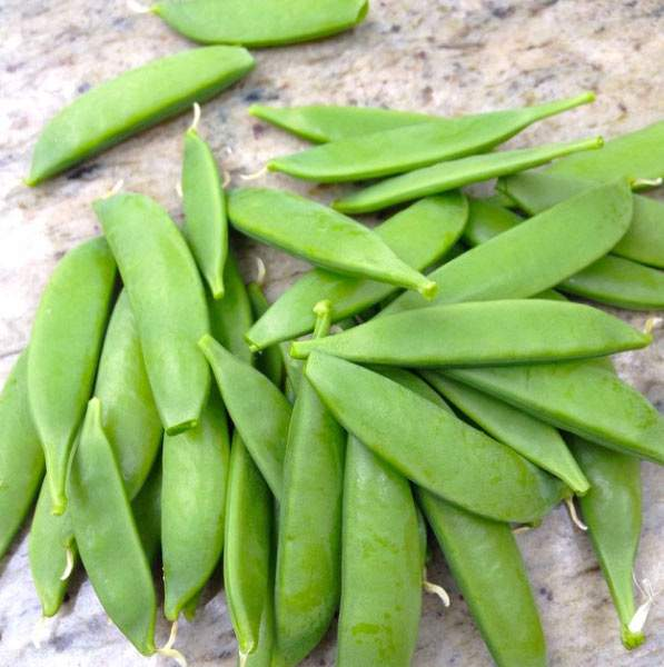 Our First Harvest of Sugar Snap peas.