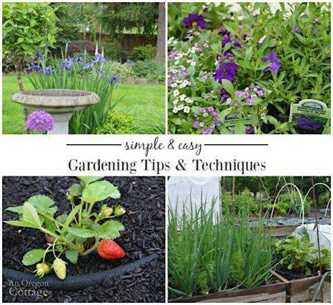 Gardening tips and techniques