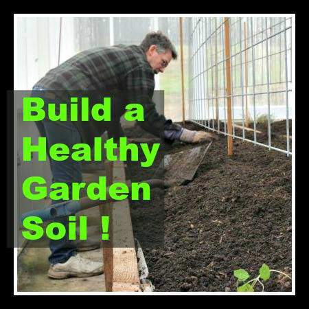 How to build a healthy garden soil.