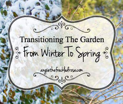 Transitioning the garden from winter to spring