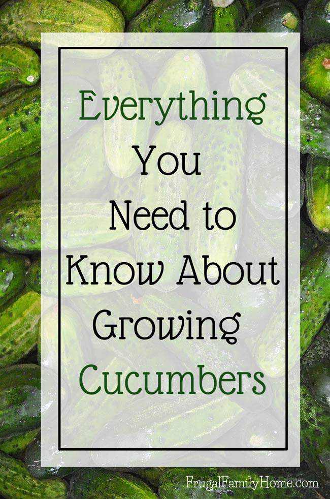 Want to grow cucumbers in your garden? I know I'll be using these gardening tips for growing cucumbers in my own garden. I love that you can grow cucumbers in containers or vertically on a trellis to conserve space. This is everything you need to know for growing cucumbers from seed to harvest.