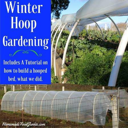 how to use a hoop cover to garden into the winter.