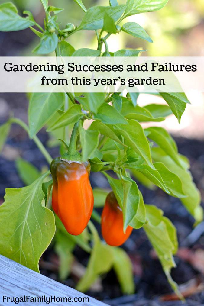 The Successes and Failures of This Year's Garden