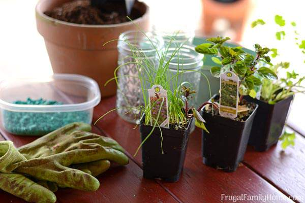 Simple Kitchen Herb Garden diy windowsill herb garden, simple garden gift