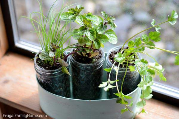 An easy DIY windowsill herb garden. This window sill herb garden is perfect to grow your herbs in your kitchen or apartment. There's also ideas for pots to use instead of mason jars too.