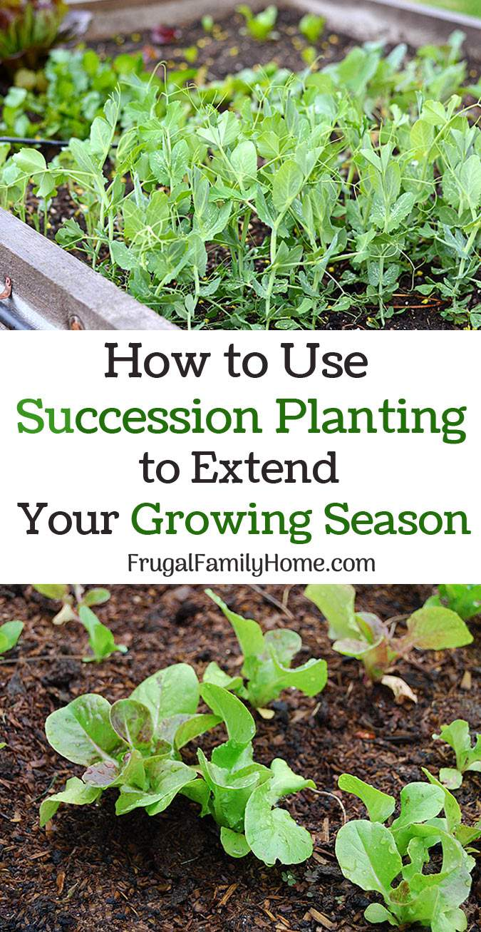Tips for Succession Planting to help extend your garden space and grow more food.