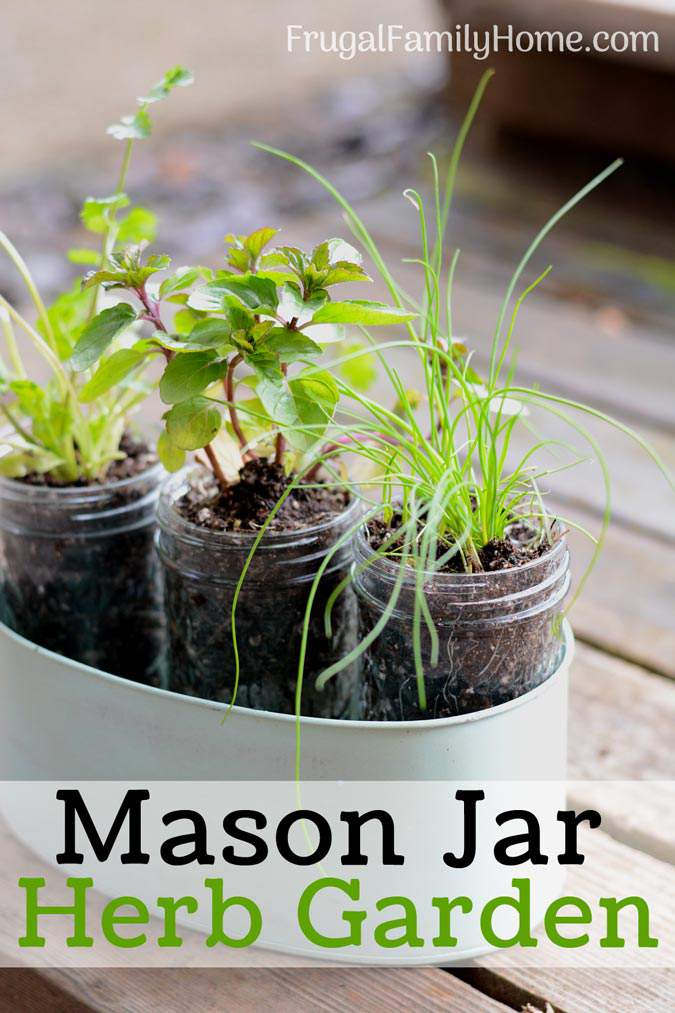 Diy Windowsill Herb Garden Simple Garden Gift Frugal