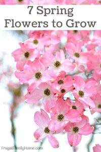 7 Spring Flowers to Grow in your Garden