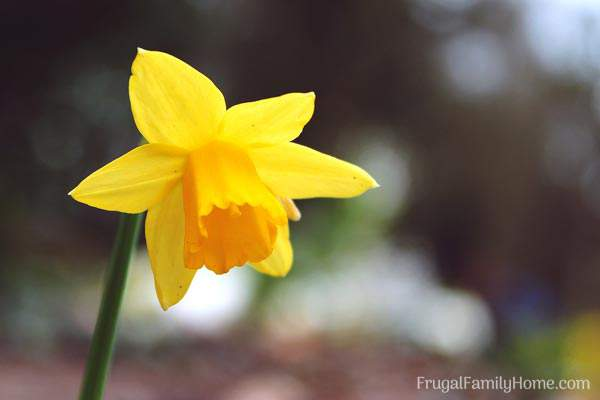 7 spring flowers to grow in your garden frugal family home wonderful flowers that are in bloom in may find a new flower to add to mightylinksfo