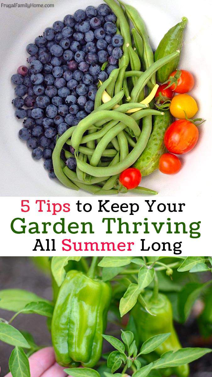 Keep your garden thriving all summer long with these 5 easy tips. These gardening tips can help your garden thrive without too much work from you.