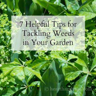Tackling Weeds in the Garden
