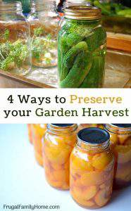 Practical Food Preservation: Ways You Can Preserve Your Fruits and Veggies