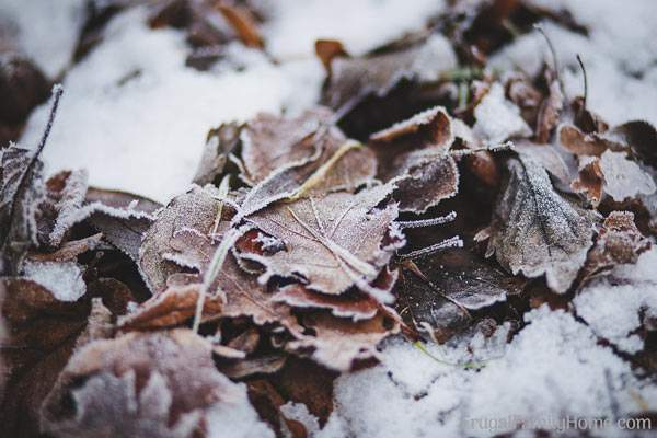 Garden tasks you'll want to do before the snow flies. When winter sets in it's time to put the garden to bed. These winter garden prep tasks can help you get your garden ready for winter so your work will be less in the spring.