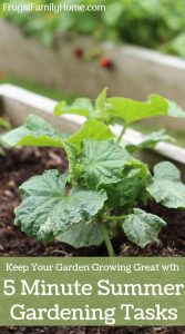 5 Minute Summer Garden Tasks to Keep Your Garden Growing