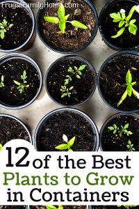 Plants that grow best in containers