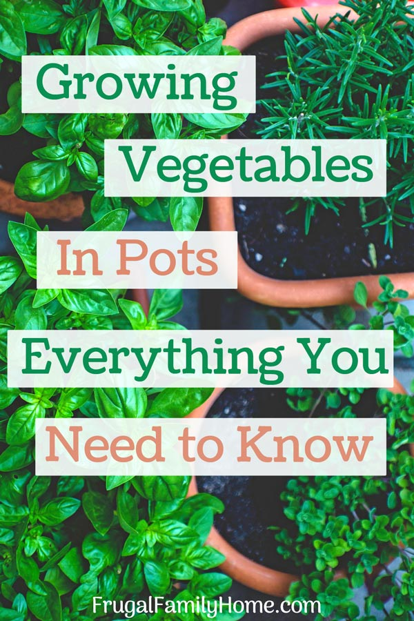 Vegetables grown in pots in a container garden