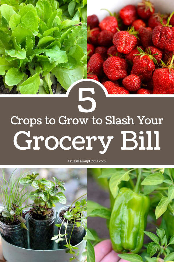 photos of crops to grow to cut grocery spending