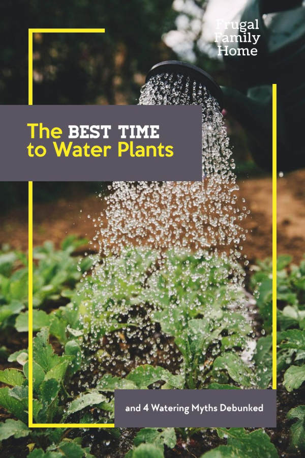 The best time to water plants banner