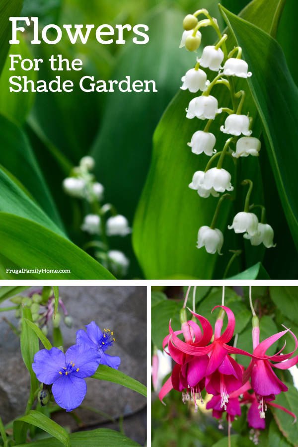 8 flowers for your shade garden